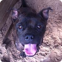 Adopt A Pet :: Shady - springtown, TX