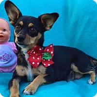 Adopt A Pet :: Baby Doll - Irvine, CA