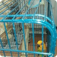 Adopt A Pet :: Sunny - Villa Park, IL