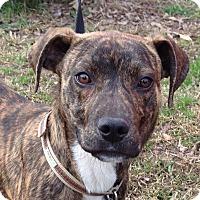 Adopt A Pet :: Milton - Trenton, NJ