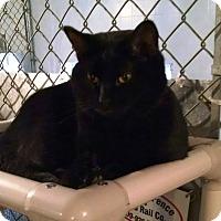 Adopt A Pet :: Meg - Geneseo, IL