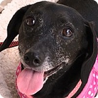 Adopt A Pet :: Ericka Esperanza - Houston, TX