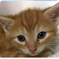 Adopt A Pet :: Lloyd - Springdale, AR