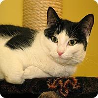 Adopt A Pet :: Lilah - Milford, MA