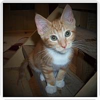 Adopt A Pet :: DAVIS - Medford, WI