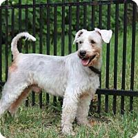 Adopt A Pet :: Maxson - Spring, TX