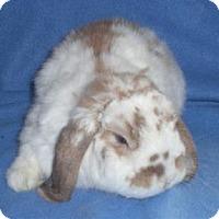 Adopt A Pet :: Narwhal - Woburn, MA