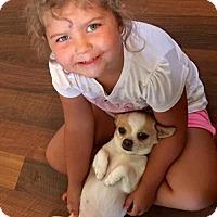 Adopt A Pet :: Shasta - Bellbrook, OH