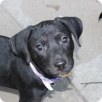 Adopt A Pet :: Elise Lynn - in Maine - kennebunkport, ME