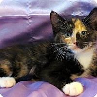 Adopt A Pet :: Billie - St. Louis, MO