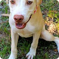 Adopt A Pet :: Zena - Kimberton, PA