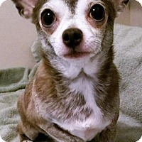 Chihuahua Mix Dog for adoption in Durham, North Carolina - Keanu