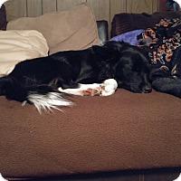 Adopt A Pet :: Dalilah/Rosie - Hanover, PA