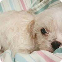 Adopt A Pet :: Flare - Fredericksburg, TX