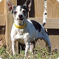 Adopt A Pet :: Tostado - Joplin, MO