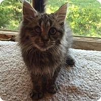 Adopt A Pet :: Venkman - Mebane, NC