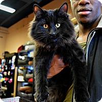 Adopt A Pet :: BEAR - Toronto/GTA, ON