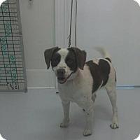 Adopt A Pet :: Chili Bean - Mt. Gilead, OH