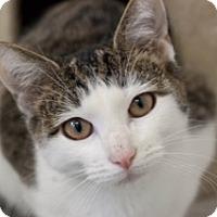 Adopt A Pet :: Pepper - Martinsville, IN
