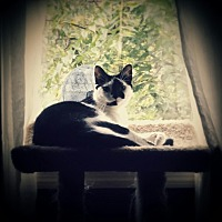 Adopt A Pet :: Makayla - Carlisle, PA
