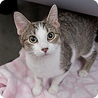 Adopt A Pet :: Chunky Monkey - Wilmington, DE