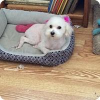 Adopt A Pet :: Ellie Mae - Tracy, CA