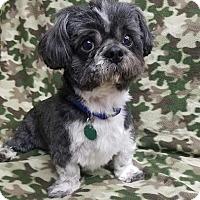 Adopt A Pet :: Reggie Champaign - Urbana, OH