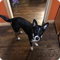 Adopt A Pet :: Veto - Richmond, MI