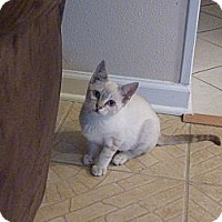 Adopt A Pet :: London - Harvey, LA