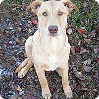 Adopt A Pet :: Gabbie~ D.O.B. 8/16/12 - Southbury, CT