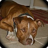 Adopt A Pet :: Cowboyjax - Phoenix, AZ