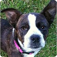 Adopt A Pet :: HAWK in TN - Memphis, TN