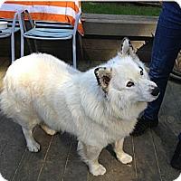 Adopt A Pet :: Milo - Gig Harbor, WA