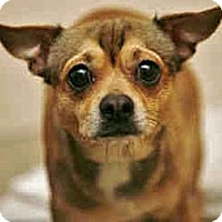 Adopt A Pet :: Frijolito - Only $25 adoption! - Litchfield Park, AZ