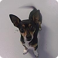 Adopt A Pet :: Inky - Muskegon, MI