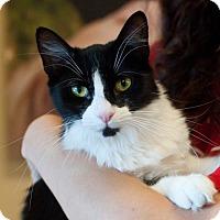 Adopt A Pet :: Cynthia - Atlanta, GA