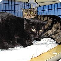 Adopt A Pet :: Barn Cats - Locket and Lola - Colmar, PA