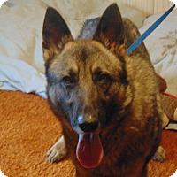 Adopt A Pet :: Volcker - Portland, ME