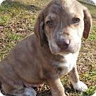 Adopt A Pet :: Babes Rascal