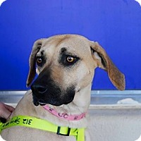 Adopt A Pet :: Smiley - SOUTHINGTON, CT