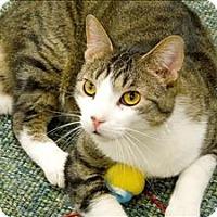 Adopt A Pet :: Jaime - Sherwood, OR