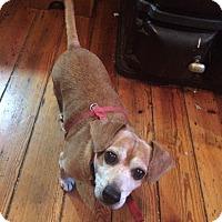 Adopt A Pet :: Buddy - Staunton, VA