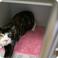 Adopt A Pet :: Fiona - Cumming, GA