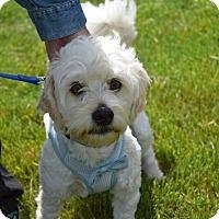 Adopt A Pet :: Riley Joe - Sparta, NJ