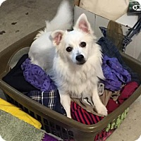 Adopt A Pet :: Ernie of Oviedo, FL - Bradenton, FL