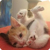Adopt A Pet :: Tilly - Trenton, NJ