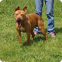 Adopt A Pet :: Buster - Cameron, MO