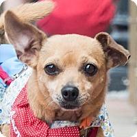 Adopt A Pet :: Emily - San Marcos, CA