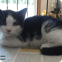 Adopt A Pet :: Rocky - Brightwaters,, NY