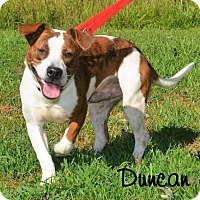 Adopt A Pet :: Duncan - DuQuoin, IL